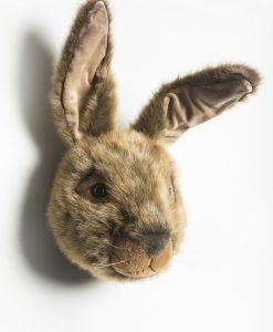 Wild & Soft Hare Head Lewis WS0053 L
