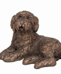 Frith Koko Labradoodle Lying AT039